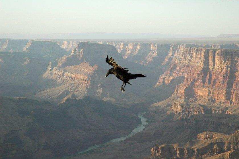 Raven GrandCanyon patokallio